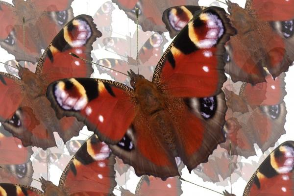 Butterfly Creative Digital Print