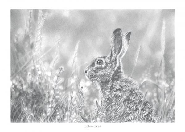 Brown Hare Pencil Drawing